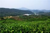 信阳平桥区:茶旅融合奏响富民曲