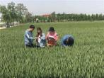 暖心!汝州农业专家全天在线解决农户粮食生产难题